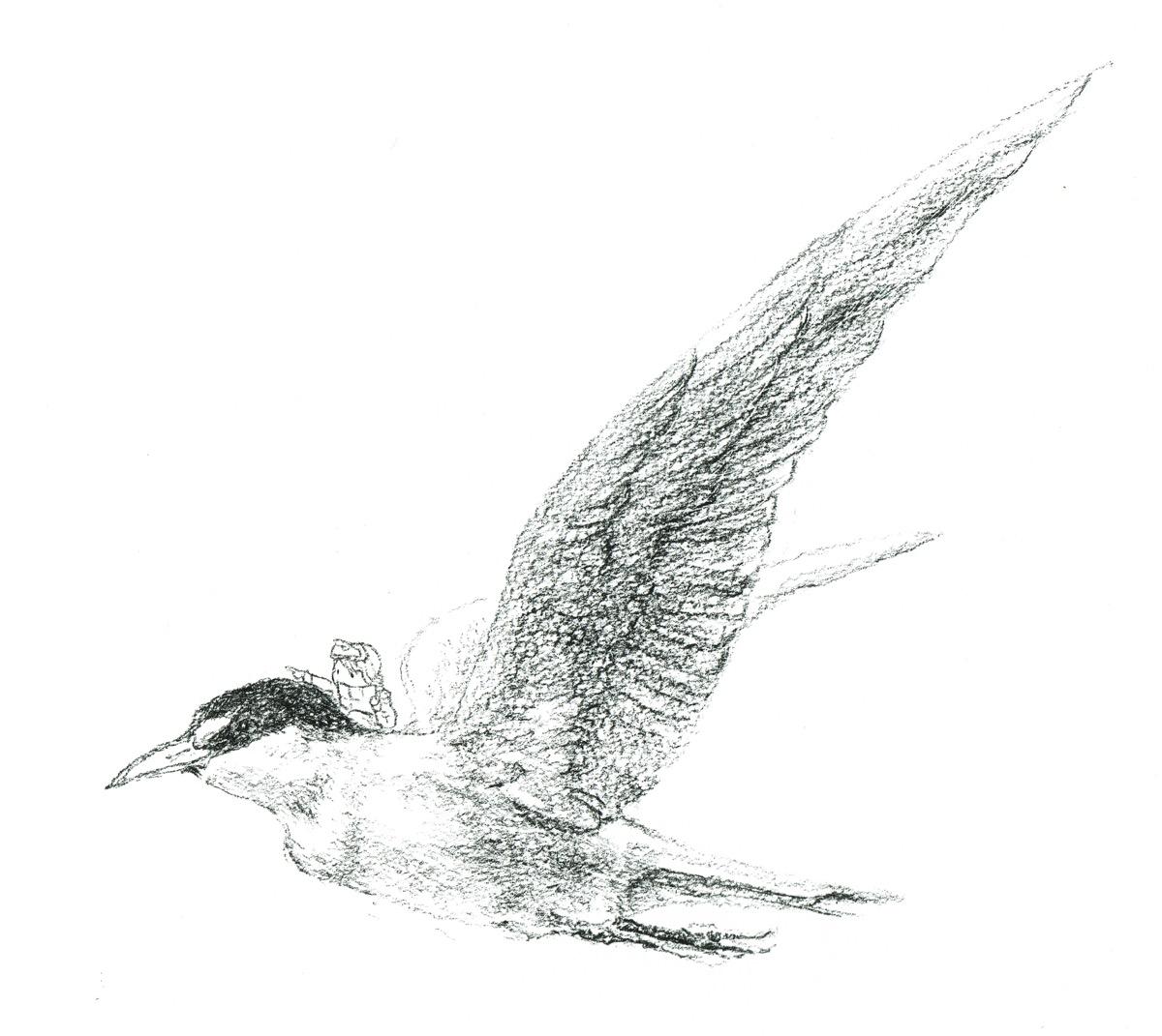 らくがき】鳥のらくがき3種 – interemit design